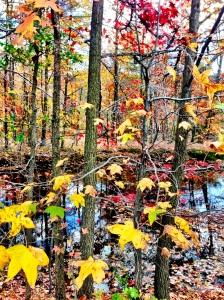 Princeton leaves