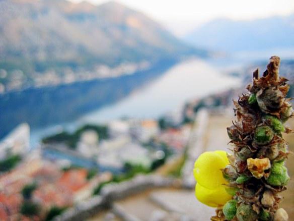 Montenegro by @debsnet