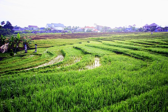 Canggu rice paddies, Bali, by @debsnet