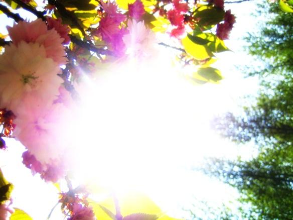letting genius blossom