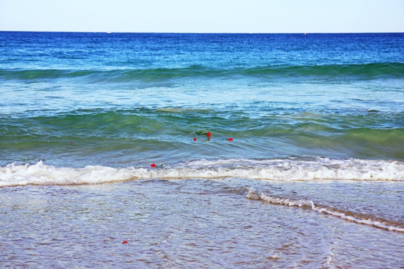 roses in the ocean, in motion carried by the waves
