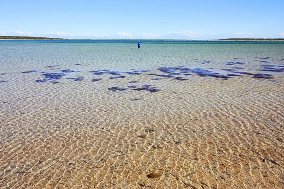 identity is liquid (aka Little Lagoon, Shark Bay)