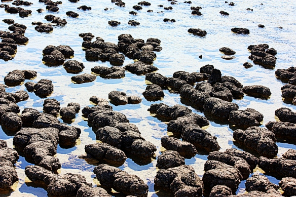 stromatolites in shallow pools