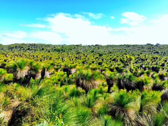 grass tree panorama